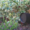 Sonance PATIO Gartenlautsprecher