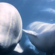 Die geheimnisvolle Welt der Wale - Disney+
